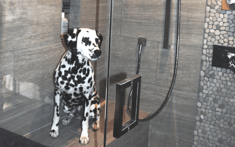 Dalmation on shower seat in tile shower